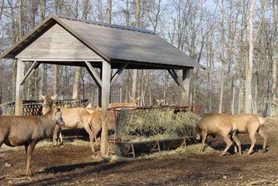 venison livestock for sale
